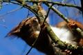 Картинка ветки, дерево, белка