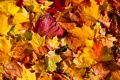 Картинка осень, листья, autumn, leaves