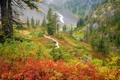 Картинка трава, кусты, деревья, фото, растения, пейзажи