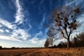 Картинка гнёзда, поле, дерево