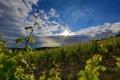 Картинка зелень, поле, небо, облака, лучи солнца, кусты, плантации