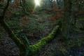 Картинка иней, лес, листья, солнце, лучи, деревья, мох