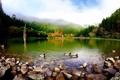 Картинка деревья, природа, озеро, пруд, парк, камни, утки