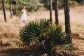Картинка растение, листья, девушка, невеста