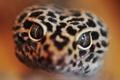 Картинка глаза, крупный план, змея
