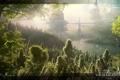 Картинка лес, природа, город, планета