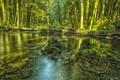 Картинка лес, деревья, река, дно