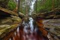 Картинка лес, вода, деревья, камни, скалы