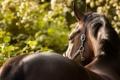 Картинка природа, конь, лето