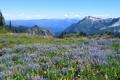 Картинка гор.опушка, горные, небо, разные, вершины, цветы