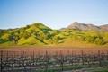 Картинка поле, небо, холмы, виноградник