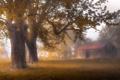 Картинка деревья, туман, дом