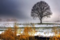 Картинка поле, трава, снег, пейзаж, дерево