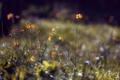 Картинка трава, цветы, природа, фото, фон, обои, растения