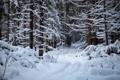 Картинка лес, снег, Зима, тропинка