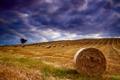 Картинка поле, лето, небо, тучи, утро, тюки, Август