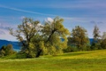 Картинка зелень, деревья, холмы, весна