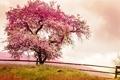 Картинка pink, blossom, tree, spring