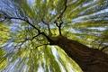 Картинка листья, ветки, дерево, ствол, кора