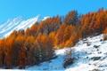 Картинка осень, небо, снег, деревья, горы, склон