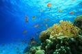 Картинка море, рыбы, риф