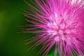 Картинка цветок, макро, Pink flower