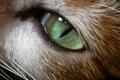 Картинка усы, зеленый, животное, кошачий глаз
