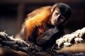 Картинка фото, канаты, обезьянка