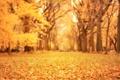 Картинка осень, листья, деревья, природа, парк, желтые, размытость