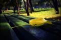Картинка аллея, парк, лист, осень, скамейка