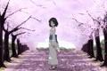 Картинка дорога, взгляд, девушка, сакура, кимоно, сияние сакуры