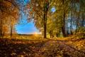 Картинка дорога, осень, небо, солнце, деревья, закат
