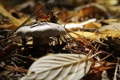 Картинка лес, гриб, осень