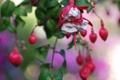 Картинка цветок, листья, цвета, фон, растение, лепестки, размытость
