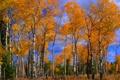 Картинка осень, небо, облака, деревья, береза, роща