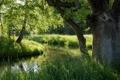 Картинка лето, природа, Bavaria, Polling