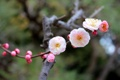 Картинка макро, цветы, веточка, весна, сакура, цветение