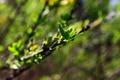 Картинка зелень, паутина, Листья, цвет.