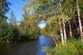 Картинка берега, листва, река, течение, деревья