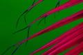 Картинка листья, линии, природа, растение, цвет
