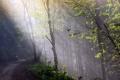 Картинка лес, свет, дорога