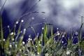 Картинка трава, капли, роса, блики, колоски, травинки