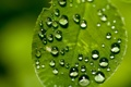 Картинка зелень, капли, макро, природа, фото, фон, green