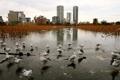 Картинка птицы, город, Tokyo, Ueno Park