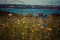 Картинка море, трава, вода, цветы, вид