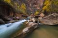 Картинка осень, деревья, река, камни, скалы, каньон, ущелье