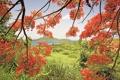 Картинка трава, листья, горы, ветки, природа, дерево, залив