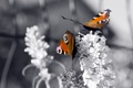 Картинка бабочки, цветы, природа