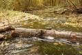 Картинка осень, природа, Река, бревно