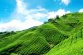 Картинка небо, облака, голубое, склон, чайная, горный, плантация